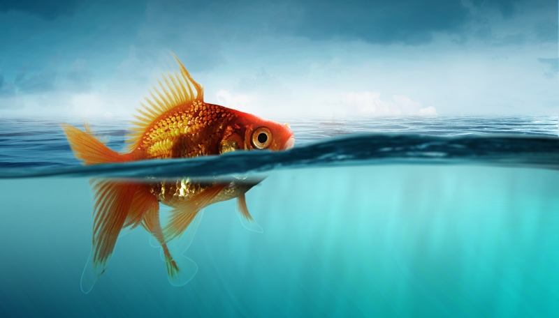 The Goldfish Fallacy: Making B2B Campaigns Stand Out To Selective Buyers
